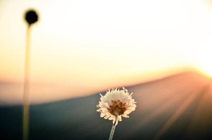 Qui e ora: vivere il presente