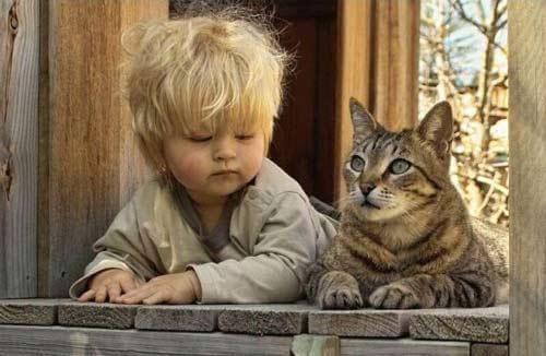 Imparare dalla psicologia felina