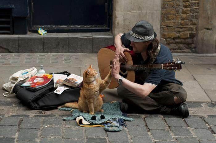Animali domestici: piccoli maestri dell'appoggio emotivo