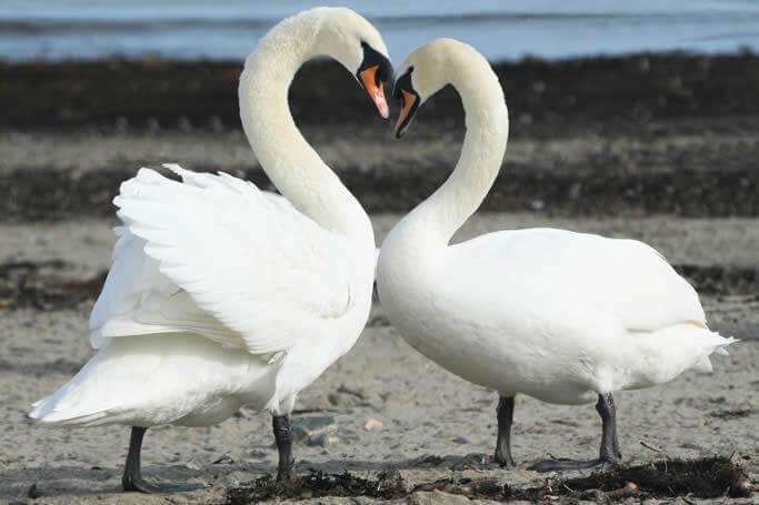 Costruire un rapporto di coppia duraturo