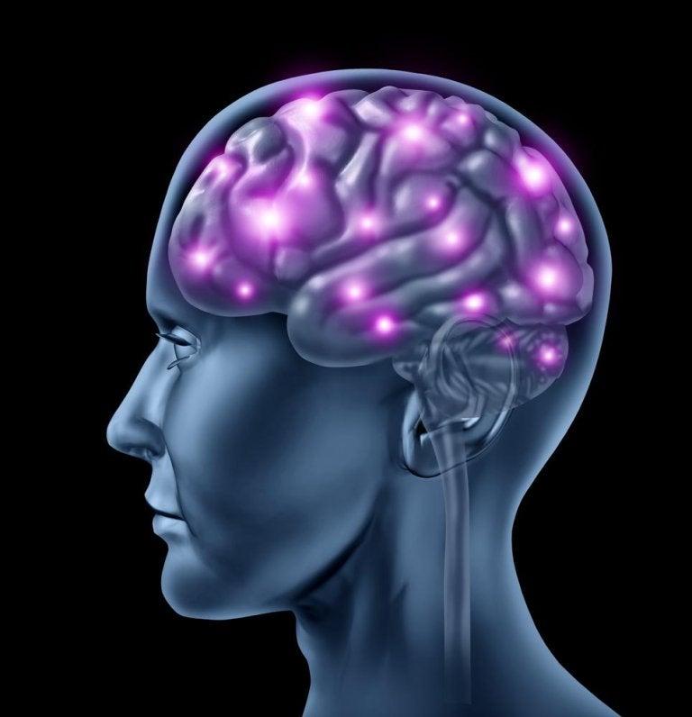 8 sorprendenti curiosità sul cervello