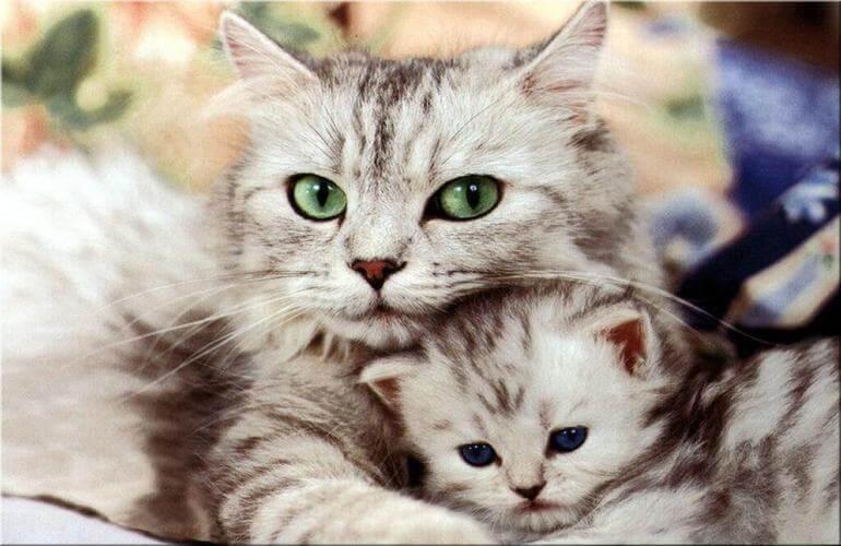 I gatti e il decalogo della felicità
