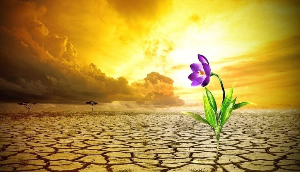 Cinque segreti per sviluppare la resilienza