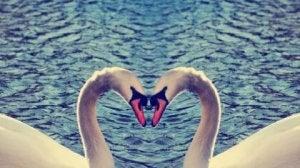amore sprecato (3)