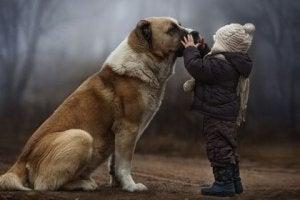 regali cani (2)