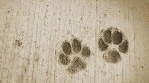 regali cani (3)
