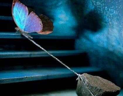 Farfalla-pietra