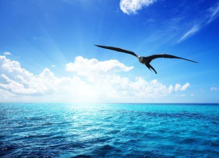 Non lasciate che nessuno vi dica mai come o dove volare!