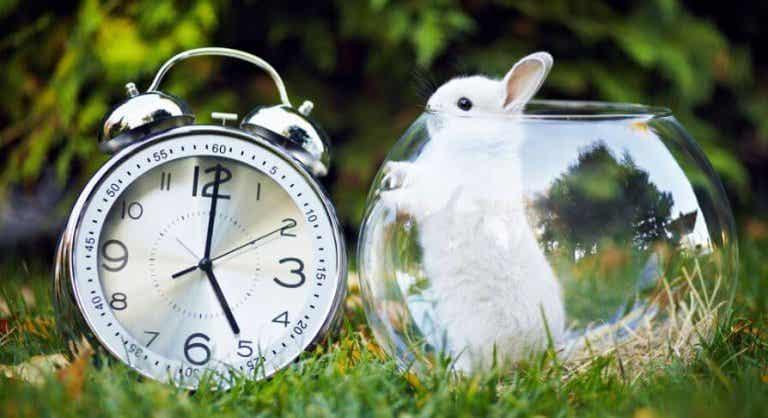 Cose produttive da fare in soli 5 minuti