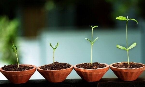 8 segnali che indicano una crescita emotiva