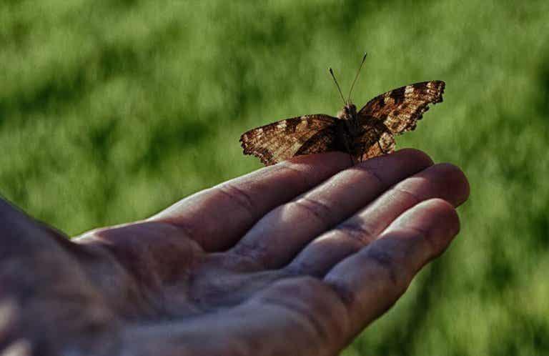La favoladell'uomo e della farfalla:quando aiutare non aiuta?