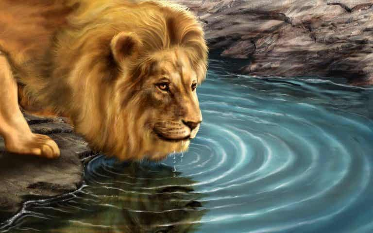 La storia del leone e il suo riflesso