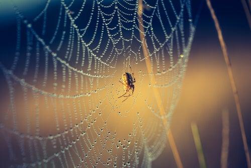 Le 6 zampe del mio ragno, la base della crescita personale