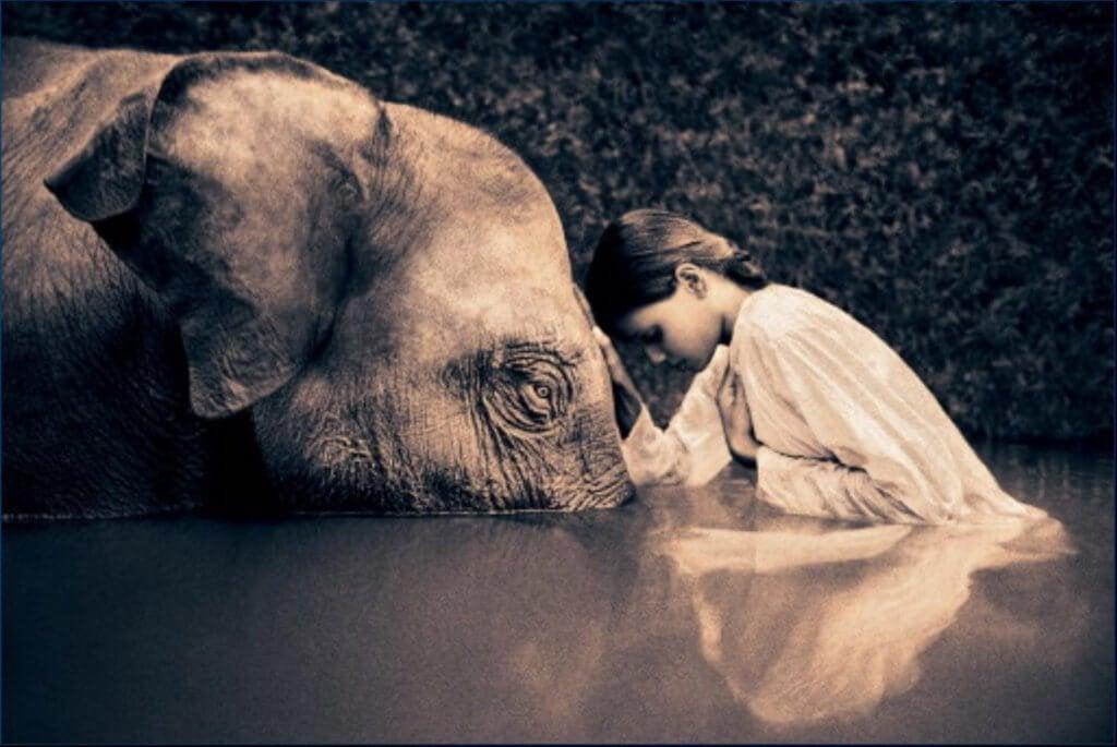 bambina ed elefante