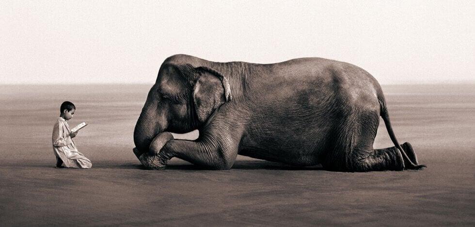 bambino che legge ad un elefante