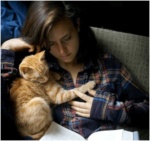 tempo gatti 2