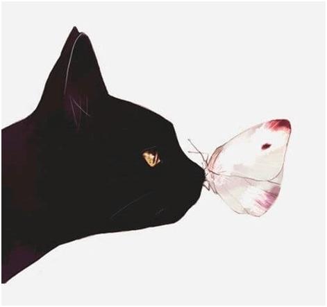tempo gatti 4