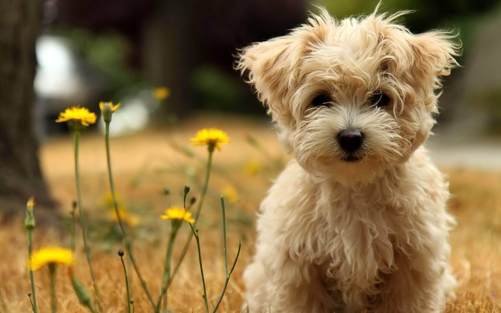 I cani non muoiono mai, riposano vicino al nostro cuore
