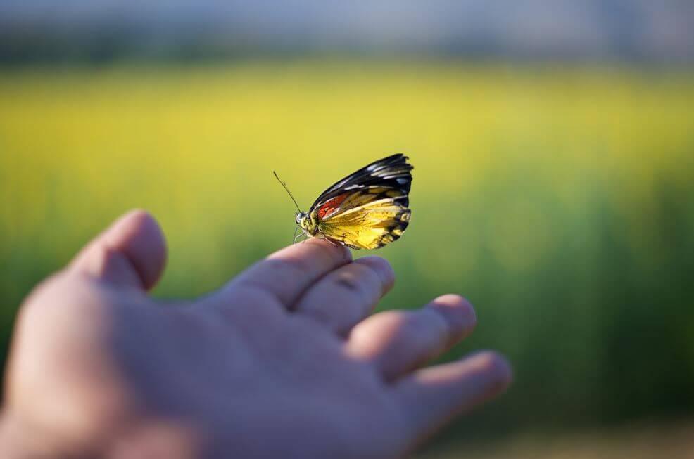 farfalla su una mano
