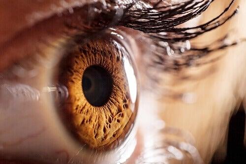 segreto pupille 2