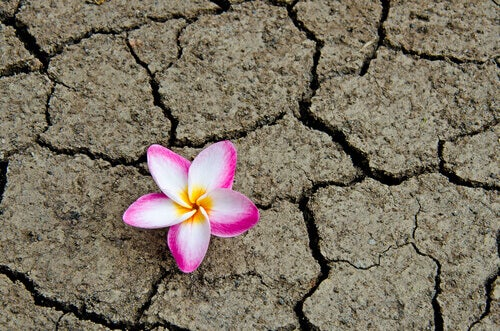Fiore-terra-arida
