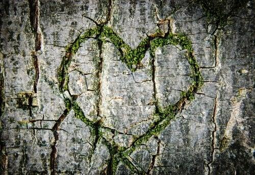 cuore-verde-albero