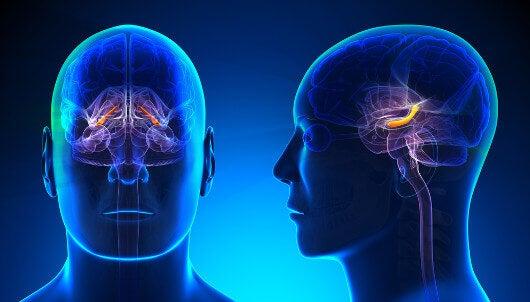 Cervello3
