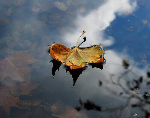 Imparate dall'autunno, lasciate cadere la vostra tristezza
