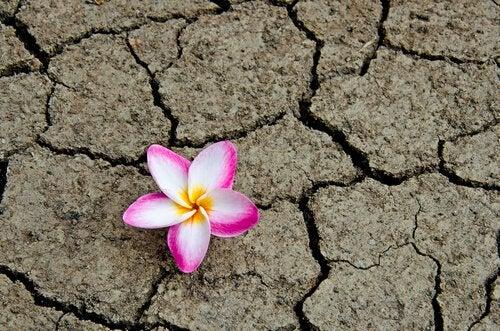 fiore nella terra arida