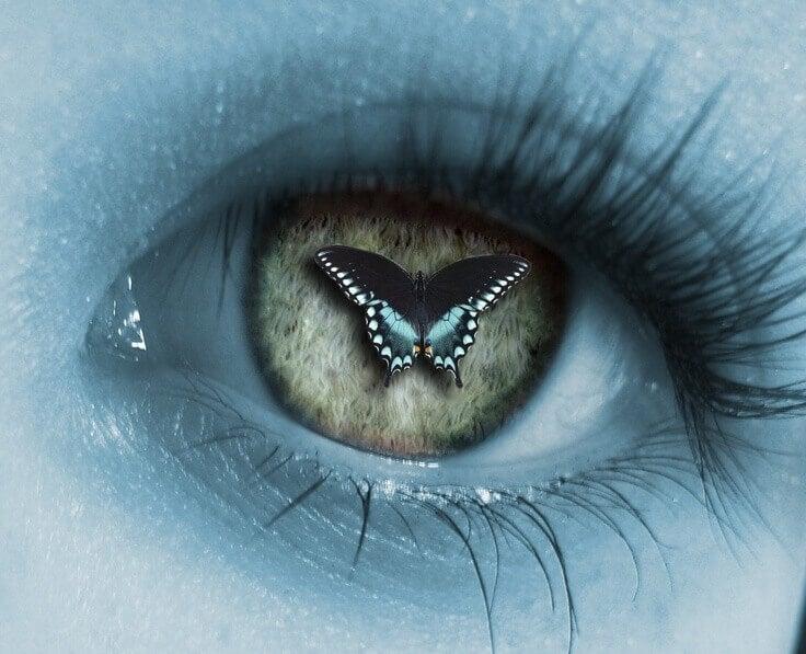pupilla-farfalla