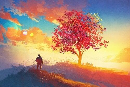 uomo e albero al tramonto