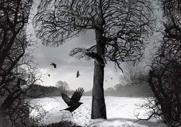 corvi, alberi e paesaggio
