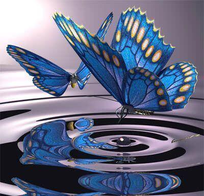 farfalla cambiamenti