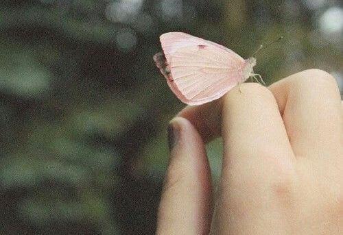 farfalla-sopra-una-mano