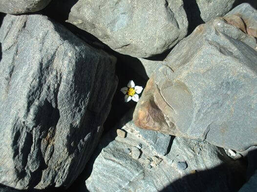 margherita pietre