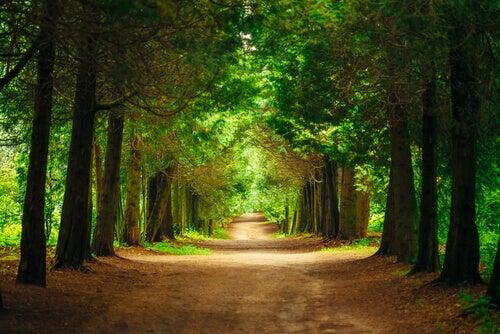 Alberi e sentiero nel bosco