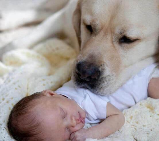 Cane-con-neonato