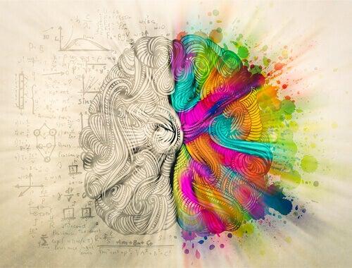 Cervello bianco e nero e a colori