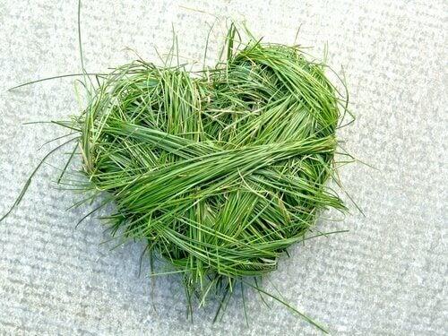 Cuore verde fatto di erba