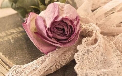 rosa ricordi felici
