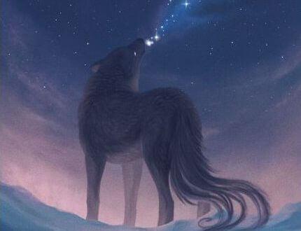 lupo rivolto all'alba