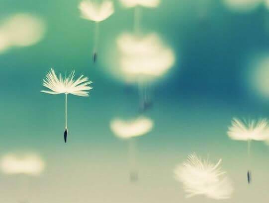 fiore sospeso in aria