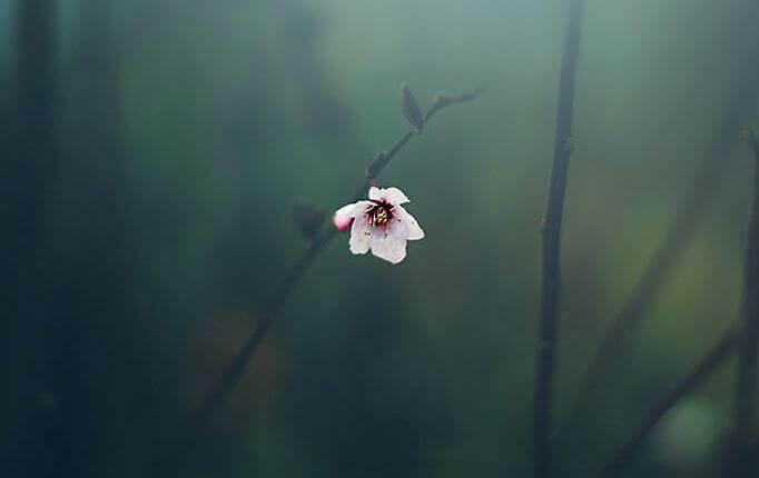 persone resilienti fiore