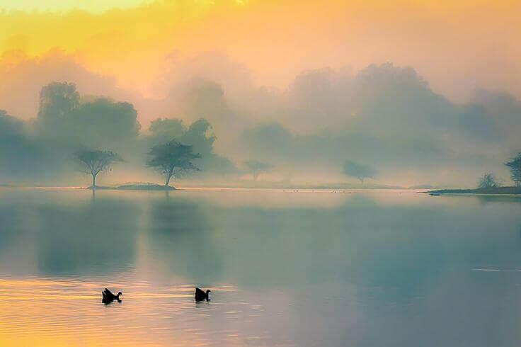 lago e cigni