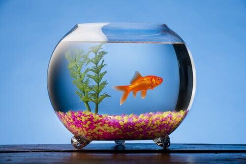 Besce nell'acquario