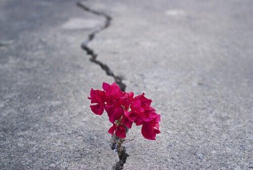 Fiori su una strada