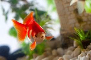 Pesce che nuota sindrome del luccio