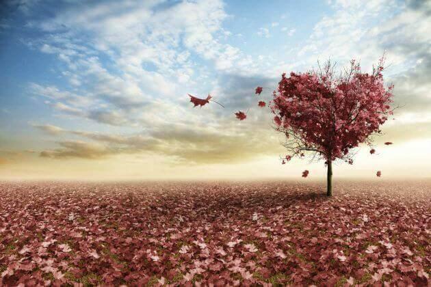 albero-a-forma-di-cuore