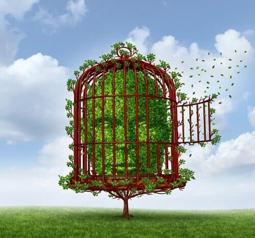 arbusto dentro una gabbia