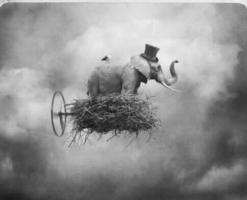 elefante-in-una-nuvola